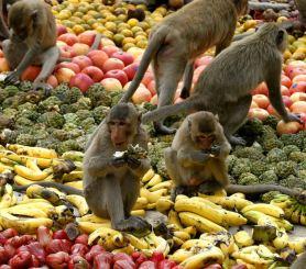 lopburi-monkey-festival1
