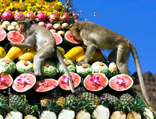 lopburi-monkey-festival2