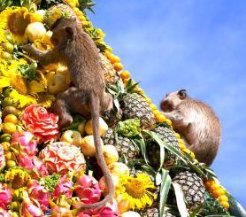 lopburi-monkey-festival3